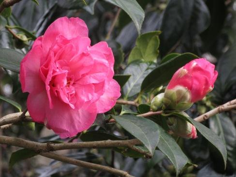 Camellia Grand Jury