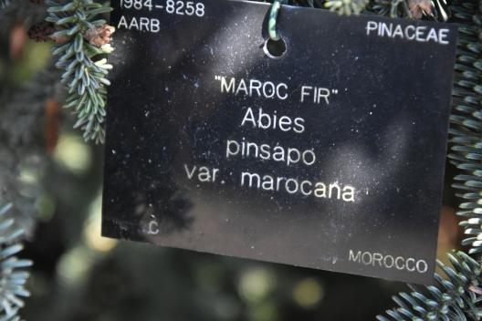 MBO_9606