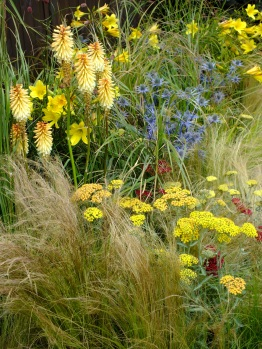 Mixed herbaceous grasses Hampton Court 2014