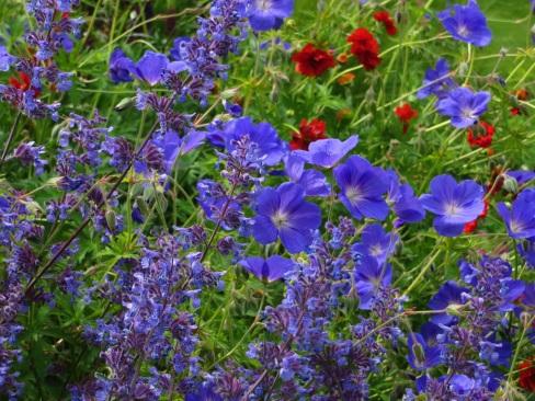 Nepeta Walkers Low Geranium Rozanne Geum Mrs K Bradshaw