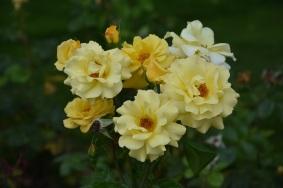 Rosa Authur Bell