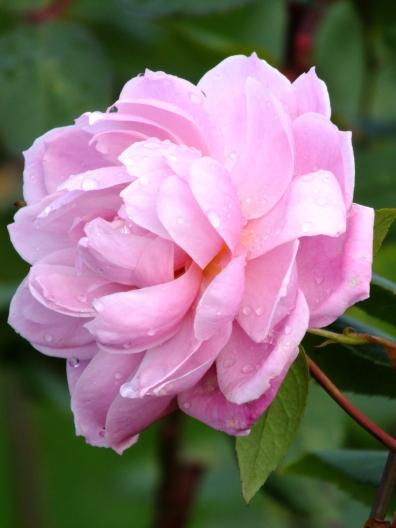Rosa Mortimer Sackler 5