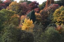 winkworth arboretum NT